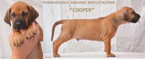 Cooper 180130
